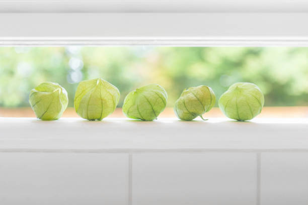 Fresh picked tomatillos from a farmhouse garden on kitchen windowsill. Open window, subway tile and shallow depth of field. stock photo