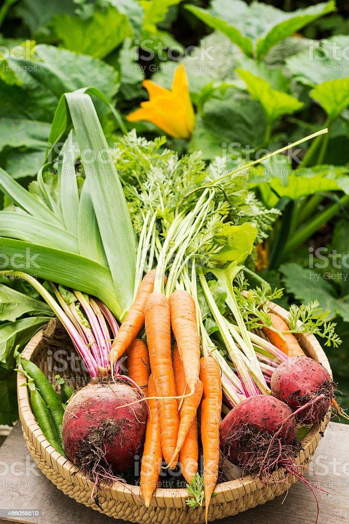 Fresh Picked Vegetables stock photo