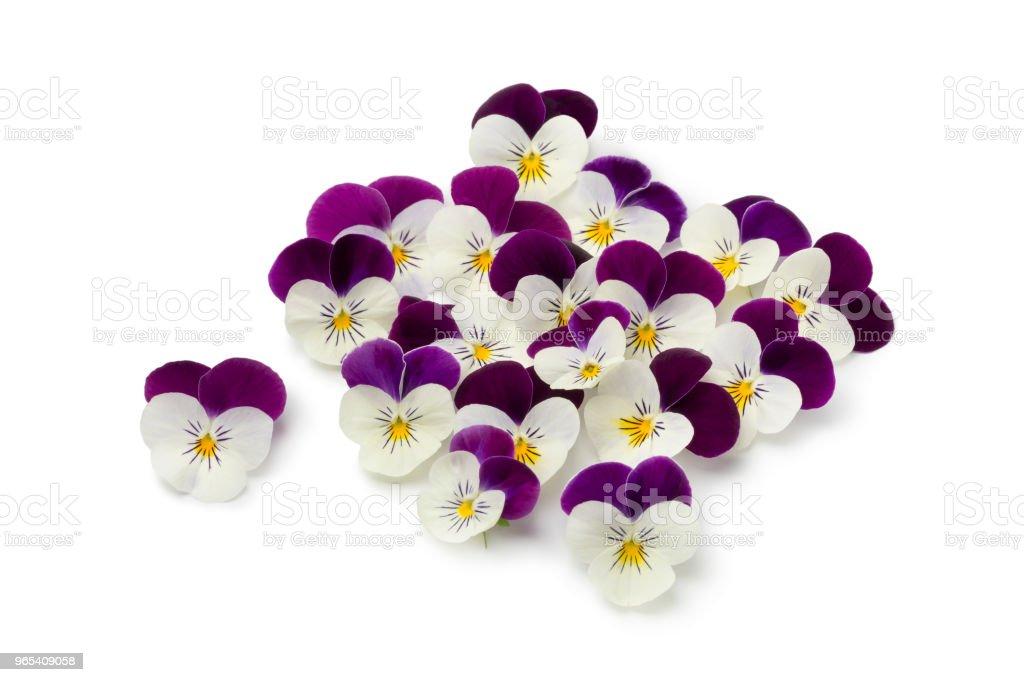Fleurs fraîches cueillies Alto - Photo de Capitule libre de droits