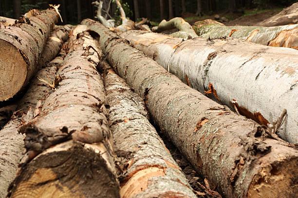 Frische Daunendecke tree – Foto