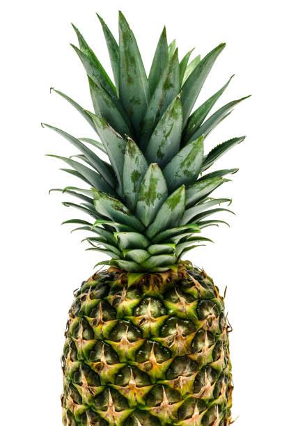 fresh pineapple fruit stock photo