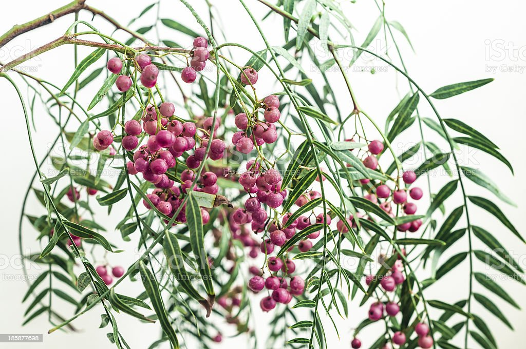 Fresh Pink Peppercorns stock photo