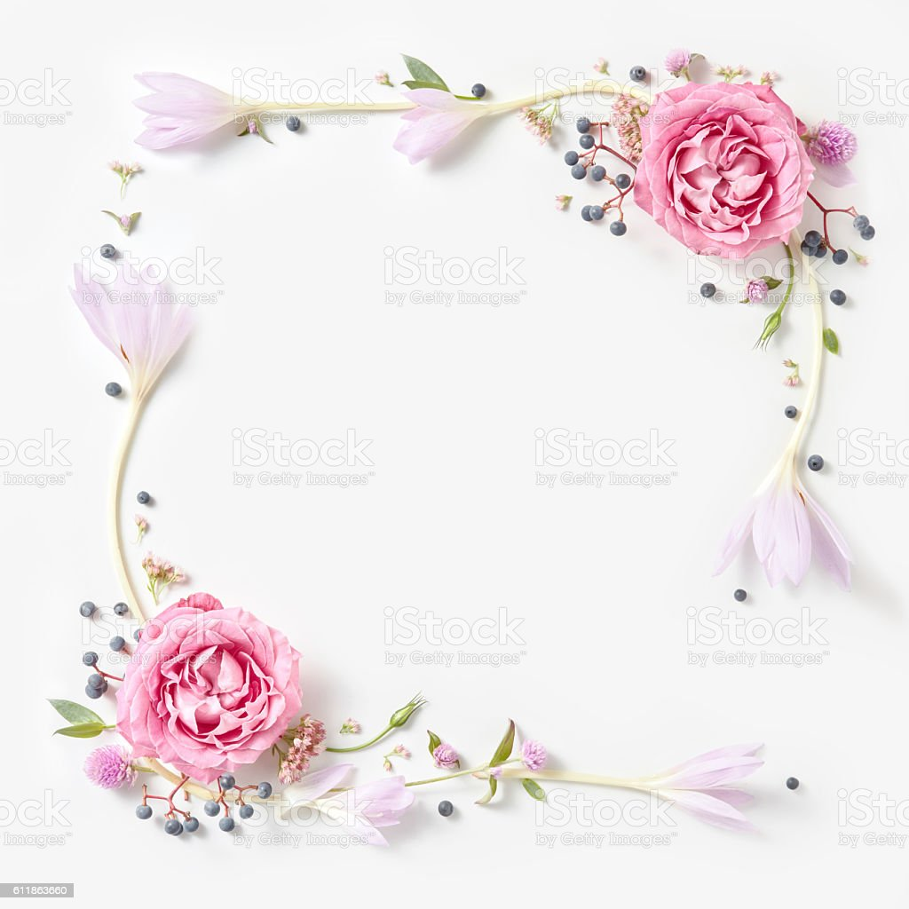 Fresh pink roses frame border isolated stock photo