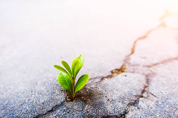 fresh plant growing out of concrete - conquering adversity stock photos and pictures
