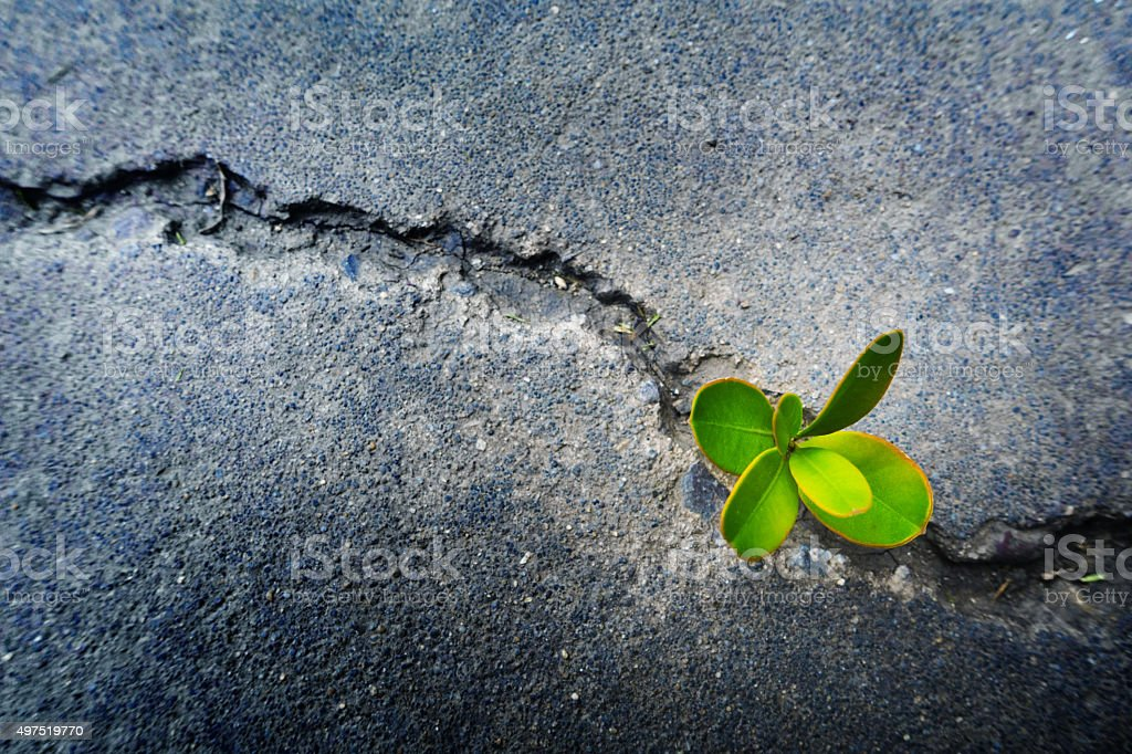 Fresh plant growing out of concrete stok fotoğrafı