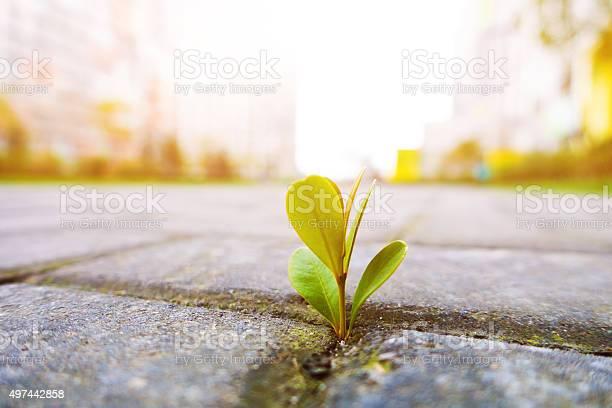 Junge Pflanze Wächst Stockfoto und mehr Bilder von 2015