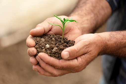 615599804 istock photo Fresh plant on soil in the hands of a farmer. 1221066746
