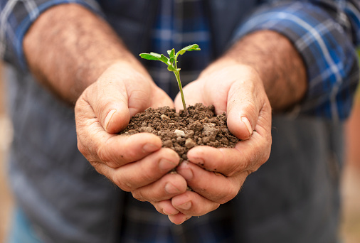 615599804 istock photo Fresh plant on soil in the hands of a farmer. 1221066749