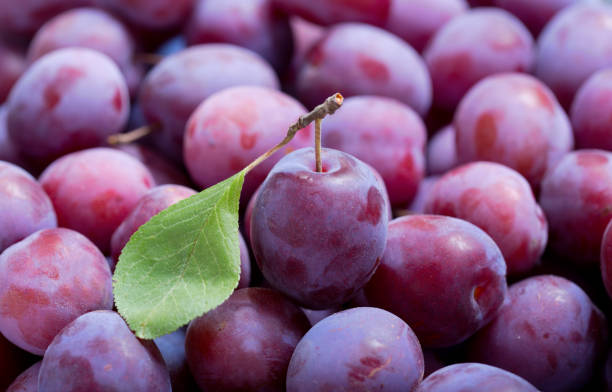 fresh plums as background stock photo