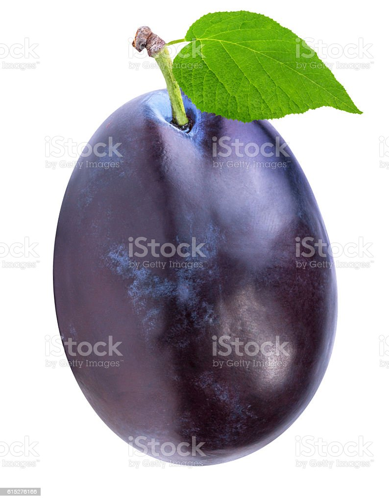Fresh plums isolated on white stock photo