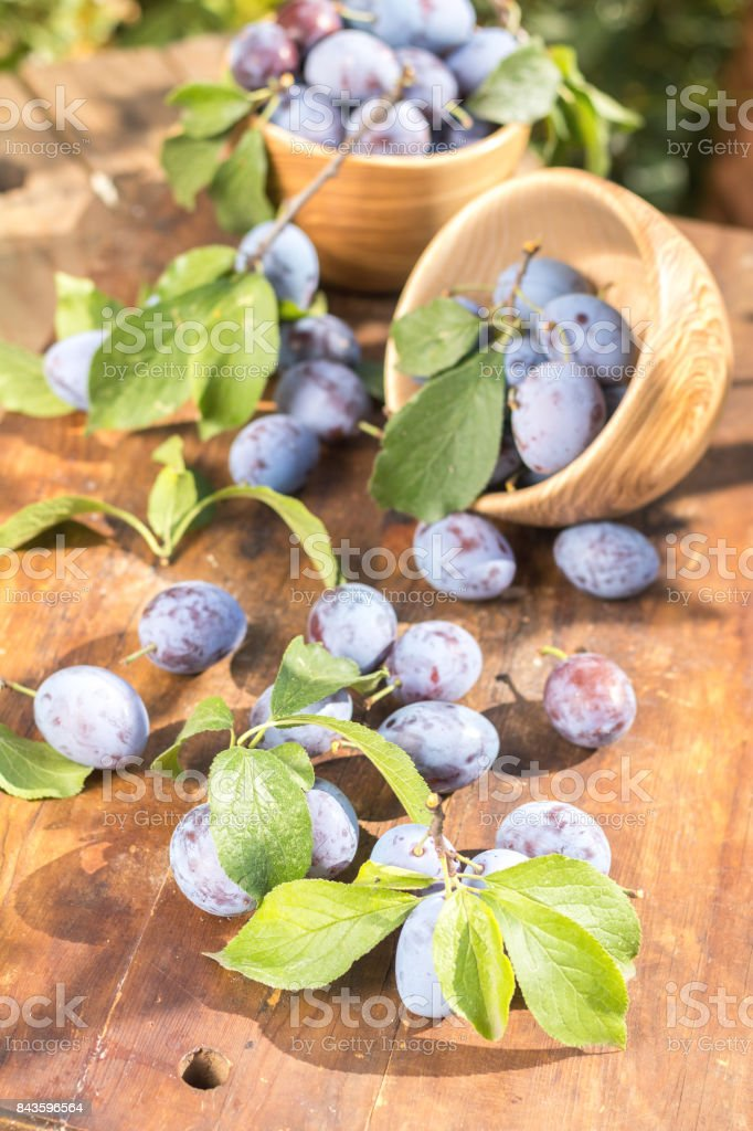 Fresh plums on wooden table in sunny day in garden royalty-free stock photo