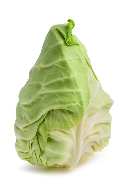 fresh pointed cabbage - gepunt stockfoto's en -beelden