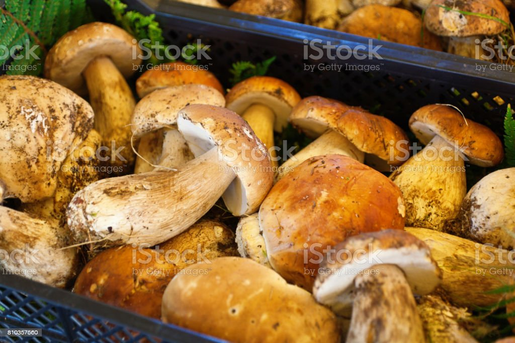 Fresco hongo Porcini en Italia mercado - foto de stock