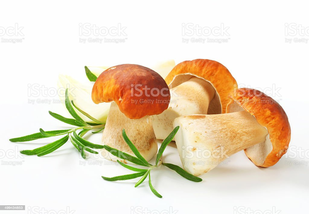 Fresh porcini mushrooms stock photo