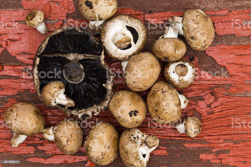 Fresh portobello and brown agaricus mushrooms stock photo