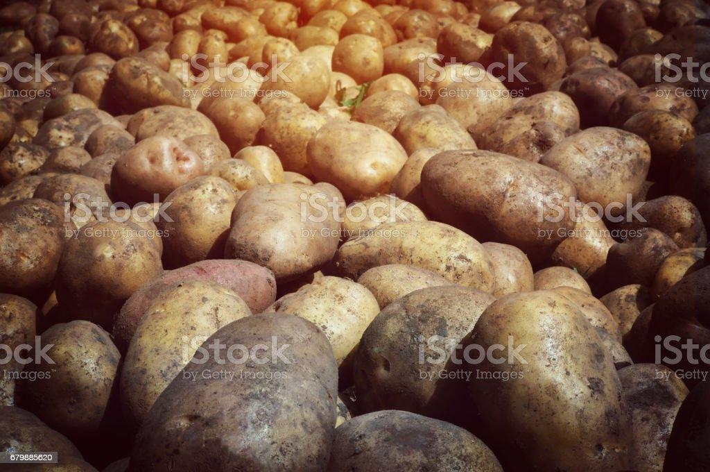 Fresh potato tubers closeup. Low-key lighting stock photo