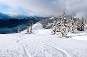 snowboard tracks in fresh powder snow (XXL)