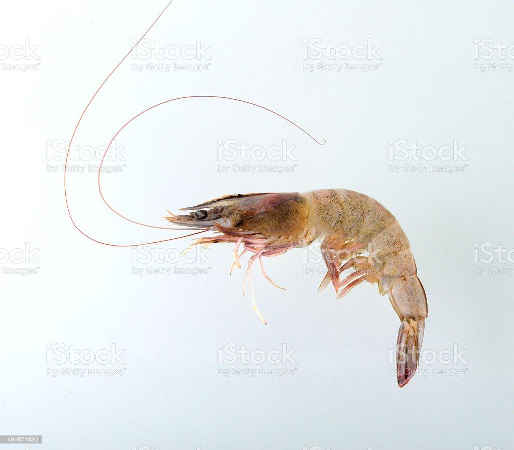 Fresh Prawn or Shrimp Isolated on white background stock photo