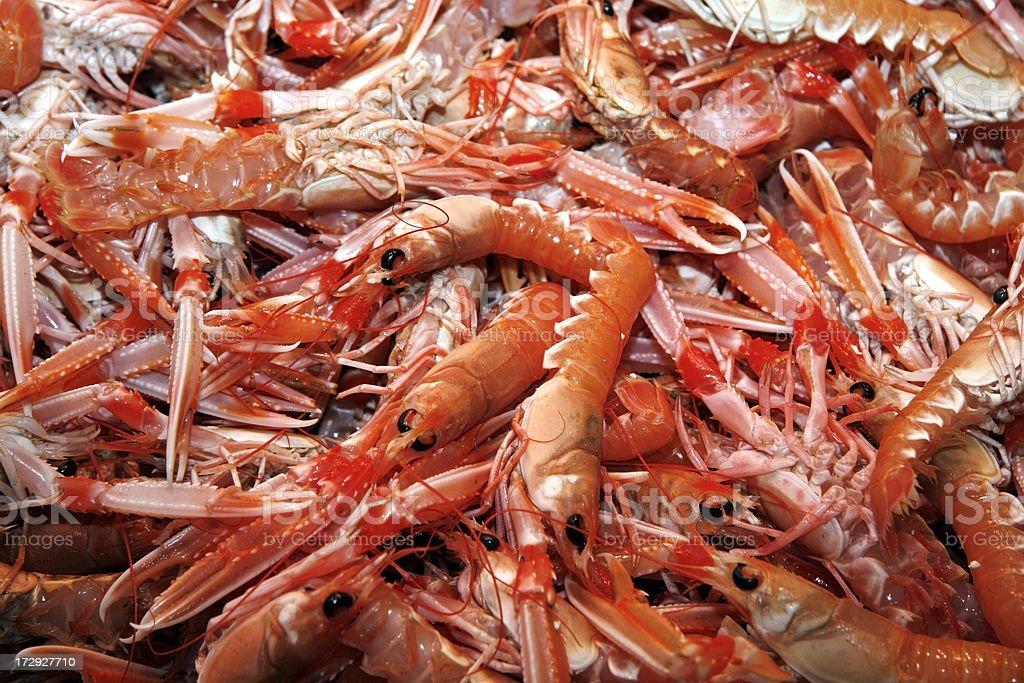 Fresh prawns on ice royalty-free stock photo