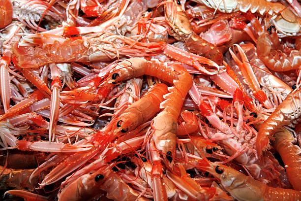 Fresh prawns on ice stock photo