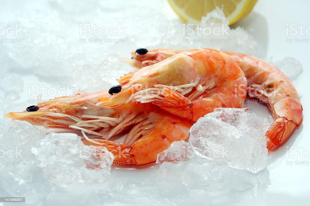 fresh prawns royalty-free stock photo