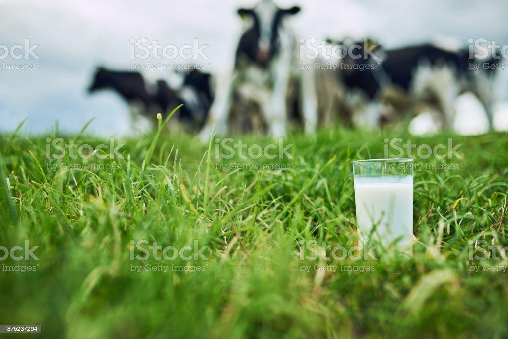 Productos frescos - Foto de stock de Actividad de agricultura libre de derechos