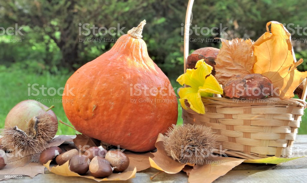 fresh pumpkin and mushrooms royalty-free stock photo