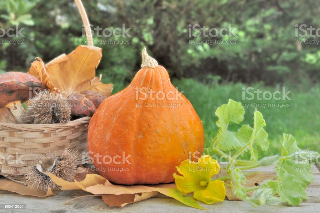 cogumelos e abóbora fresca - Foto de stock de Cesto royalty-free