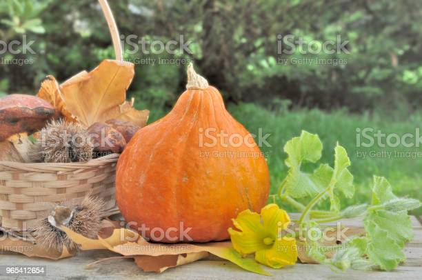 Foto de Cogumelos E Abóbora Fresca e mais fotos de stock de Cesto
