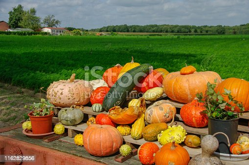 Fresh Pumpkins for sale in the country