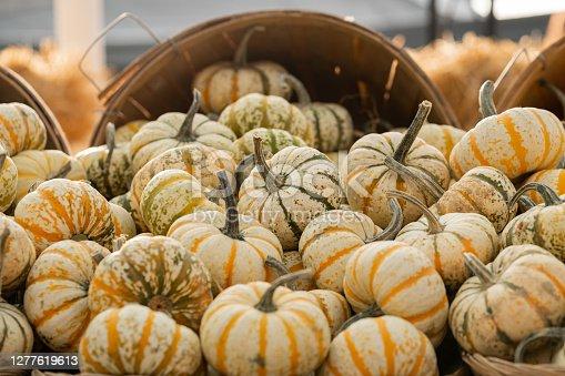 Fresh pumpkins on the market