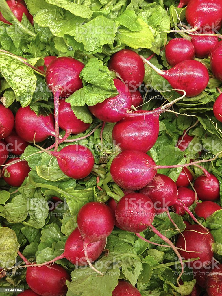 Fresh Radiches royalty-free stock photo