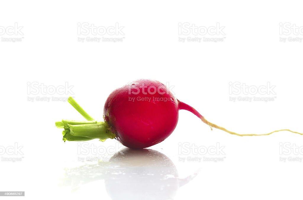 Fresh radish isolated on white royalty-free stock photo
