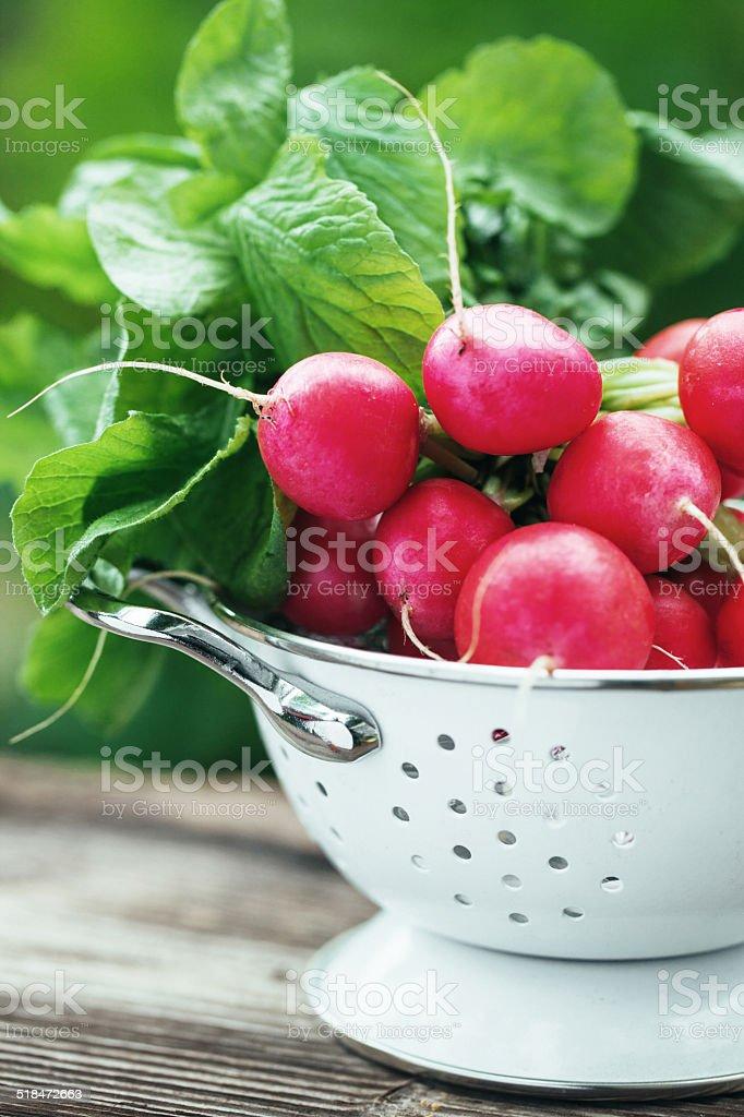 Fresh radish stock photo
