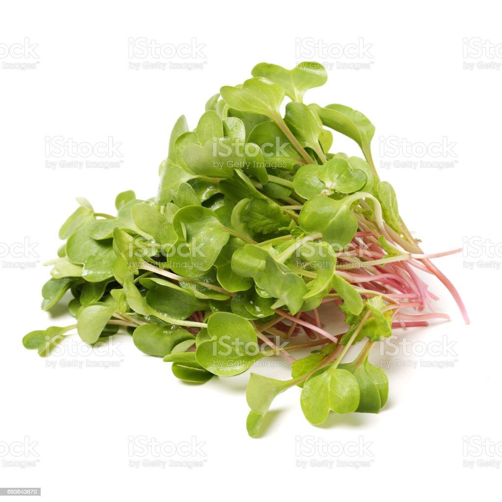 Fresh radish sprouts or Kaiware Daikon on a white background stock photo