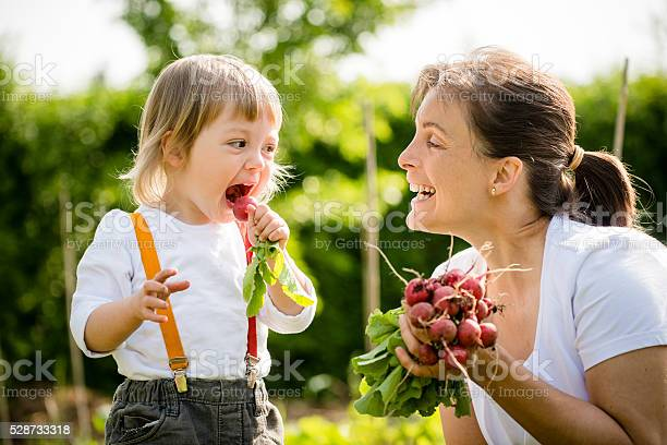 Little child eating freshly picked up red radish, smiling mother looking on it - outdoor in garden