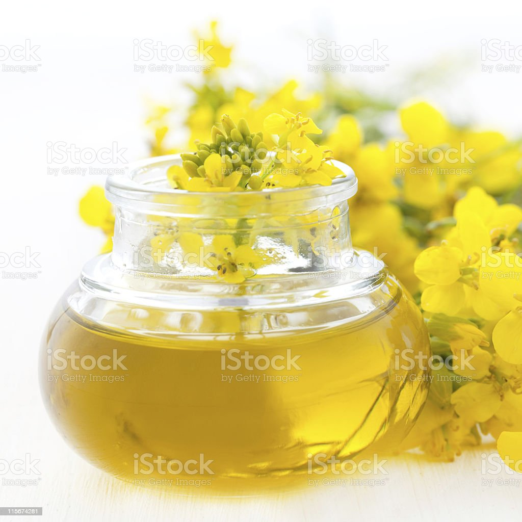 fresh rapeseed oil stock photo