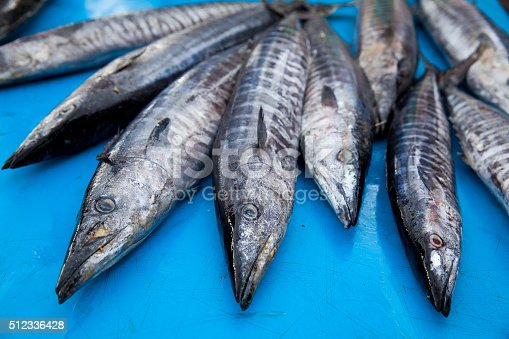 635931692 istock photo Fresh raw barracuda fish in market 512336428
