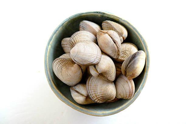 frischen rohen clam - herzmuschel stock-fotos und bilder