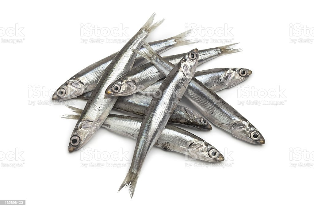 Fresh raw European anchovy stock photo