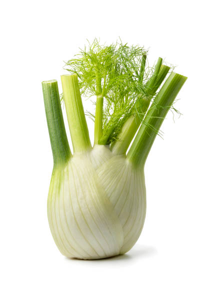 Fresh raw fennel bulb Fresh raw organic fennel bulb isolated on white background fennel stock pictures, royalty-free photos & images
