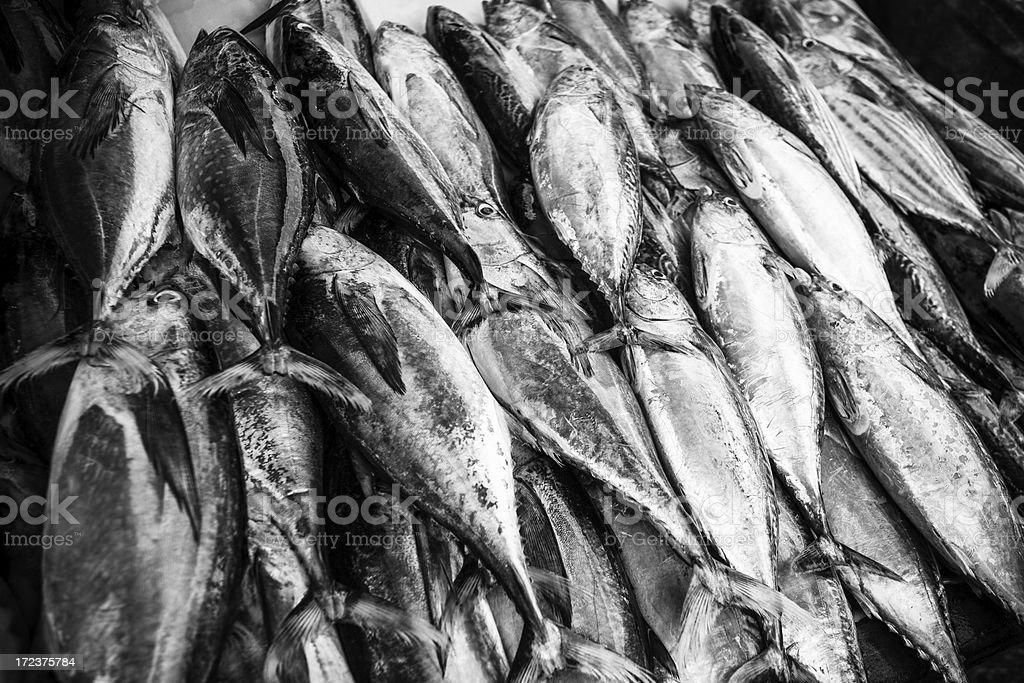 Fresh Raw Fish, Black and White royalty-free stock photo