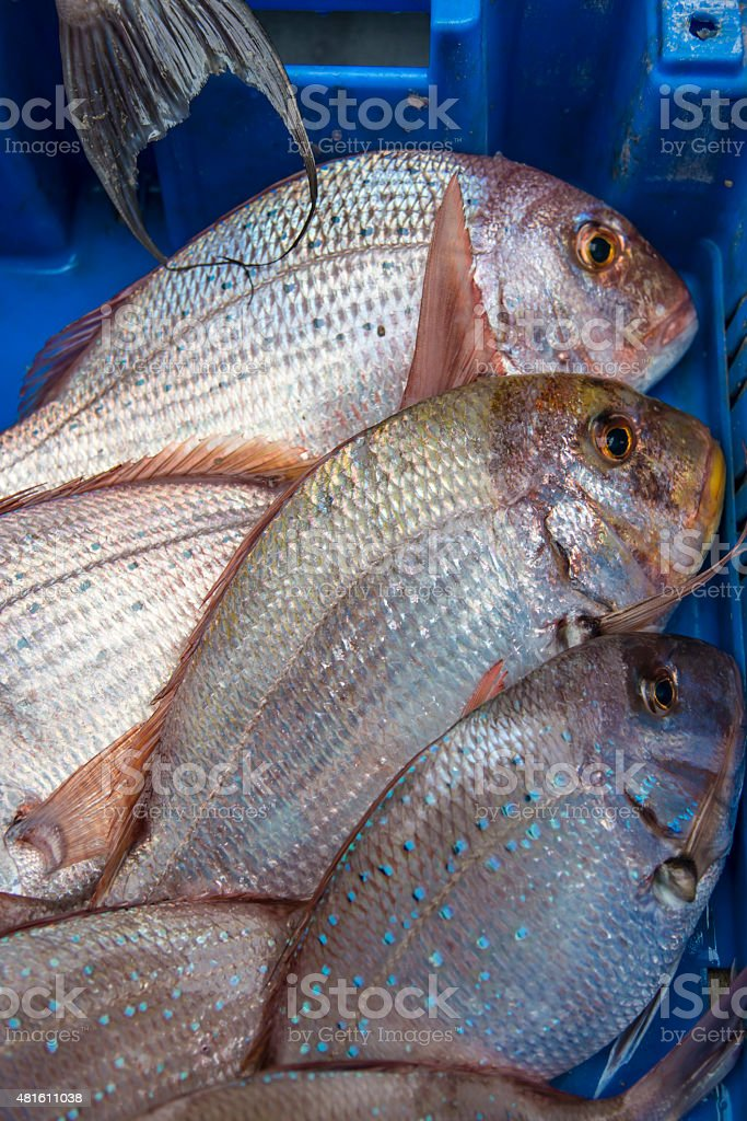 Fresh raw fish common pandora in the market stock photo