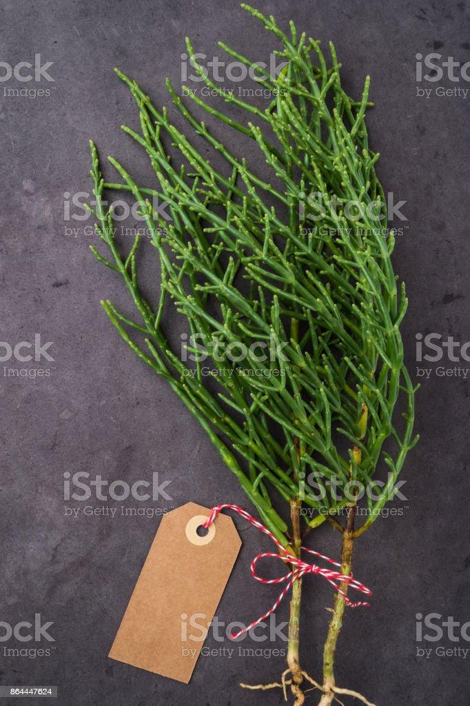 Fresh raw green samphire stock photo