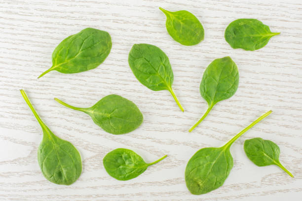 Fresh raw green spinach on grey wood stock photo