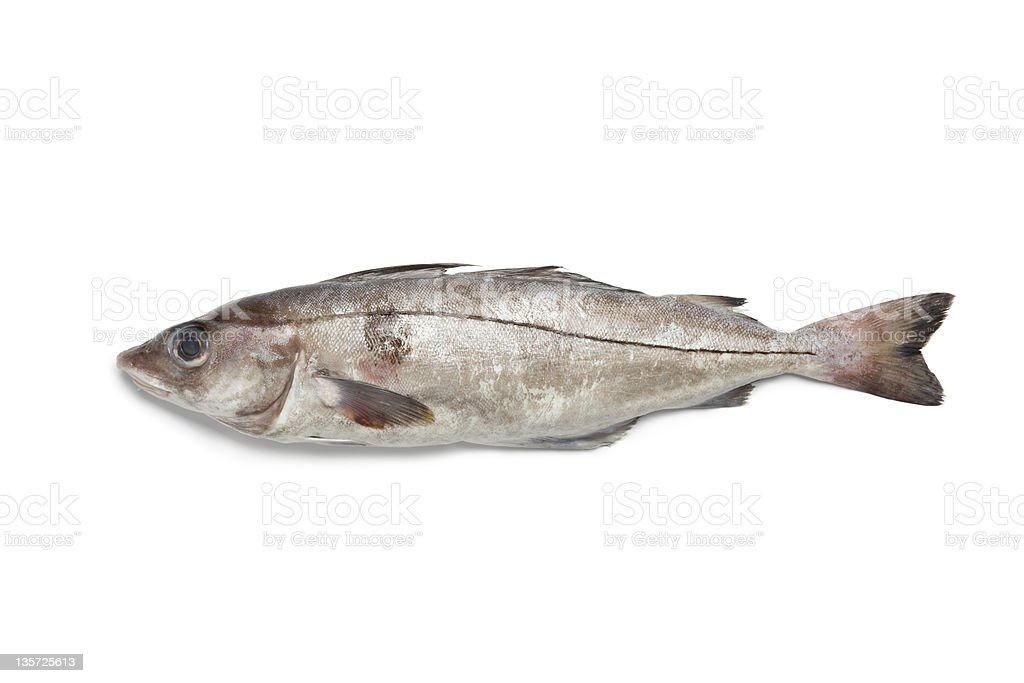 Fresh raw haddock royalty-free stock photo
