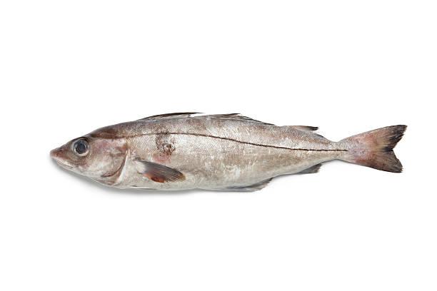 Fresh raw haddock stock photo