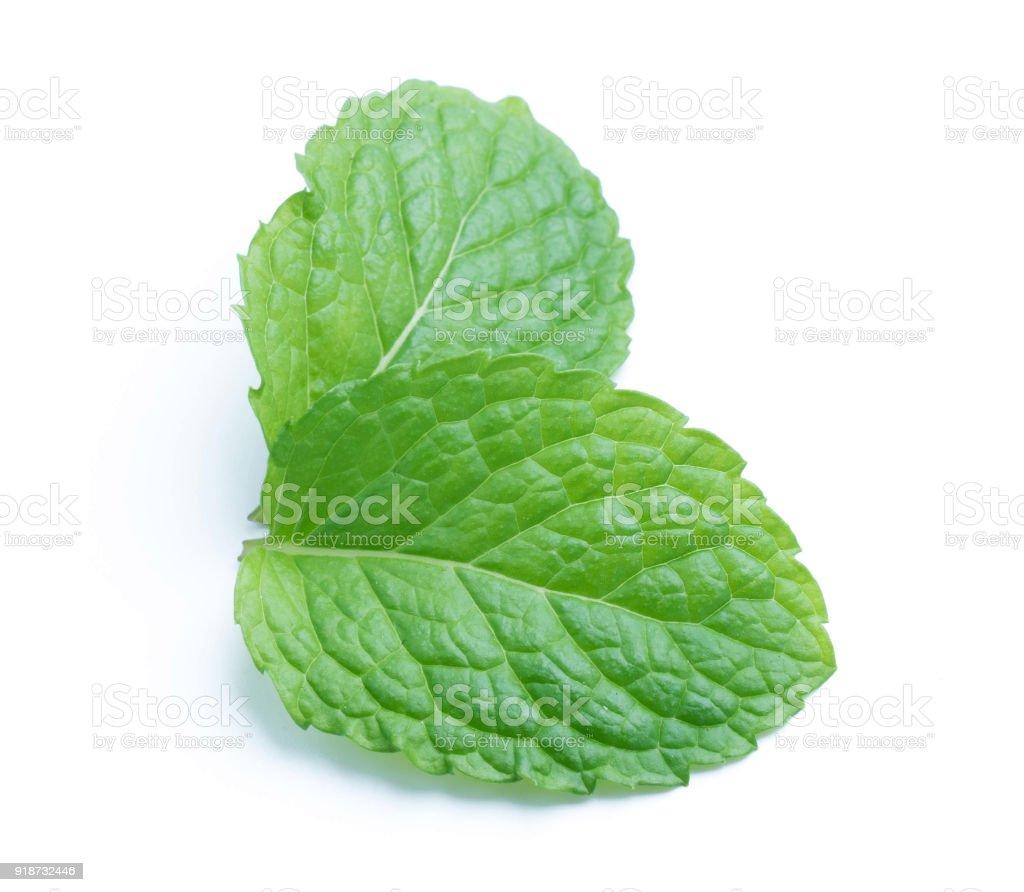 fresh raw mint leaves isolated on white background stock photo