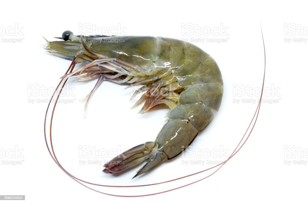 Fresh raw prawns stock photo