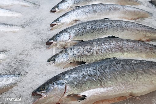 Fresh Raw Salmon Fish On Ice For Sale On Fish Market.